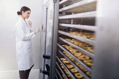 Woman Specialist in Food Quality and Health Control Checking Apples. Woman Specialist Working With Food Drying Chamber Checking Sliced Apples before drying Stock Photo