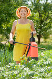 Woman spraying  plant in field Stock Photos