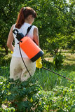 Woman spraying potato plant. In field stock photography