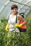 Woman spraying tomato plant Royalty Free Stock Photo