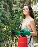 Woman spraying tomato Royalty Free Stock Image