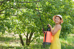 Woman spraying tree branches. In garden Stock Images
