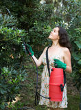 Woman spraying tree branches Royalty Free Stock Photo