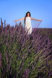 Lady of Lavender Stock Photo