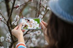 Woman in spring blossoming garden photographs flowering tree Stock Images