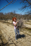 Woman spring cleaning the orchard. Caucasian woman spring cleaning the orchard, carrying cut branches to throw them away Stock Images