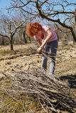 Woman spring cleaning the orchard. Caucasian woman spring cleaning the orchard, gathering cut branches to throw them away Royalty Free Stock Images