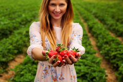 Woman in spring dress, holding hands full of freshly picked strawberries, with strawberry orchard field in background stock photo