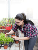 Woman with sprouts in greenhouse Stock Photography