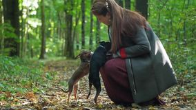 Woman squatting strokes two small dogs. One dog shakes himself off stock footage