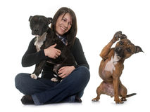 Woman and staffordshire bull terrier Stock Photos