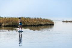 Woman stand up paddleboarding. On lake. Young girl doing watersport on lake. Female tourist in swimwear during summer vacation Royalty Free Stock Photo
