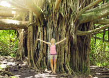 Woman standing in front of incredible banyan tree Stock Photo