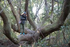Woman standing in large tree royalty free stock images