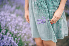 Woman Standing in Lavender Garden Royalty Free Stock Photos