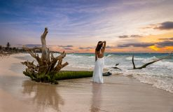 Woman Standing Next To A Drift Wood Tree In Tulum Royalty Free Stock Photo
