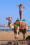 Woman Standing On A Camel On A Ocean Background Stock Photos