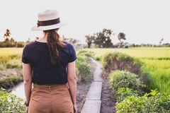 The woman standing on the path in the rice field. And the evening light stock images
