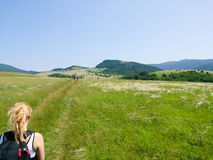 Woman in standing on peak of meadow in mountains and looking to Royalty Free Stock Image