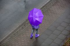 Woman is standing in the rain with a purple umbrella. A woman is standing in the rain with an umbrella Stock Image