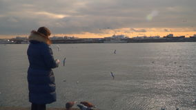 A woman is standing on the shore and feeding gulls. Evening time stock video