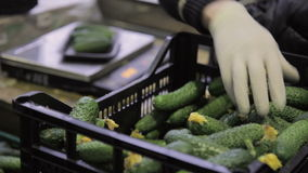 Woman stands near scales takes cucumber From plastic box. Puts on platform weighs for packing vegetables for sale. Professional worker female Dressed in uniform stock video