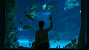 Woman stay near big aquarium tank, watching the fish. Tourism and entertaiment concept Stock Images