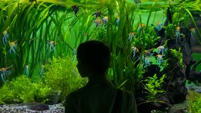 Woman stay near big aquarium tank, watching the fish. Tourism and entertaiment concept Stock Image