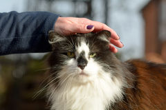 Woman stoking a cats head Stock Photos