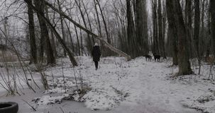 Woman and stray dogs in winter park. Woman walking in winter park and keeping away from the pack of stray dogs stock footage