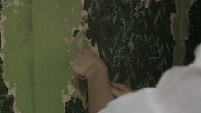 Woman stripping old wallpaper stock video