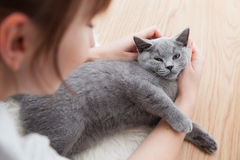 Woman stroke her car. The British Shorthair pedigreed kitten Stock Photos