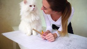 Woman stroking big white cat, which sitting on table. Turkish Angora cat withdrew mistress from work. Do you came to help me, Snowy girl say. Pet looking in stock footage