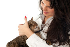 Woman stroking grey cat Stock Images