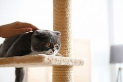 Woman stroking her cat at home. Closeup royalty free stock images