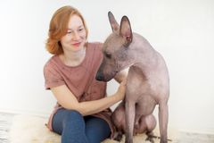 A woman stroking a Mexican Hairless Dog. On a rug Royalty Free Stock Photo