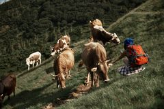 Woman is stroking and photographing cows in mountains stock image