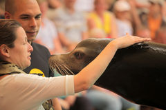 Woman stroking sealion. During show in Loro Parque in Tenerife, Spain Royalty Free Stock Photography
