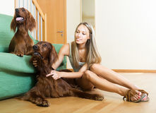 Woman stroking two setters Stock Photos