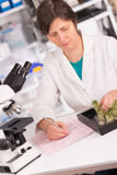 Woman study of genetic modified GMO plants in  laboratory Royalty Free Stock Photos