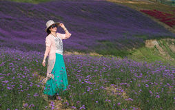A Woman in Stunning Large Lavender Field stock photo