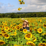 Woman sun-five. A young happy woman in a field of sunflowers Stock Image