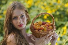 Woman in sunflower chain with a basket of fruit Stock Photography