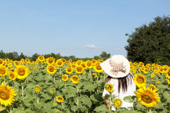 Woman in sunflowers field Royalty Free Stock Photos