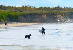 Woman surfer surfboard dog ocean. Woman surfer with surfboard and a dog on the ocean beach. Baleal, Portugal royalty free stock photography