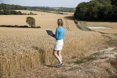 Woman surveying field of wheat UK Stock Photography