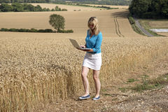 Woman surveying field of wheat UK Stock Images