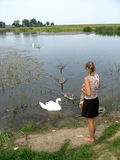 Woman and swans Royalty Free Stock Image