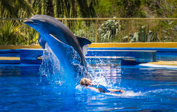 Woman swimming with dolphin Royalty Free Stock Image