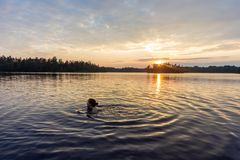 Woman is swimming in the lake